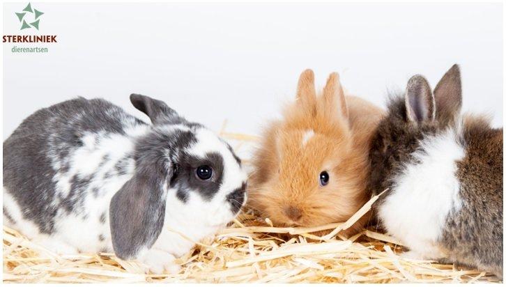Entaktie konijn